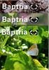 Baptria - Suomen Perhostutkijain Seuran lehti - Vol 31 Nro 1,2,3-4