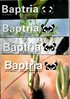 Baptria - Suomen Perhostutkijain Seuran lehti - Vol 33 Nro 1-4