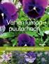 Värien lumoa puutarhaan - Ainutlaatuinen opas kasvien valintaan